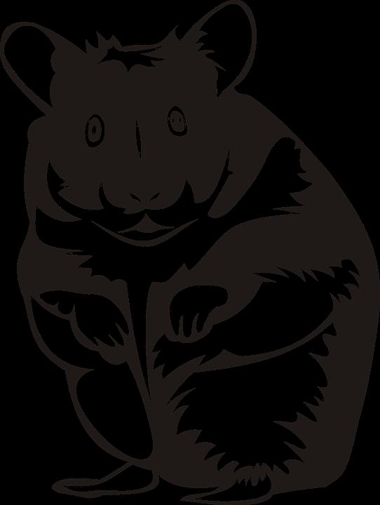 hamster-2386463_960_720