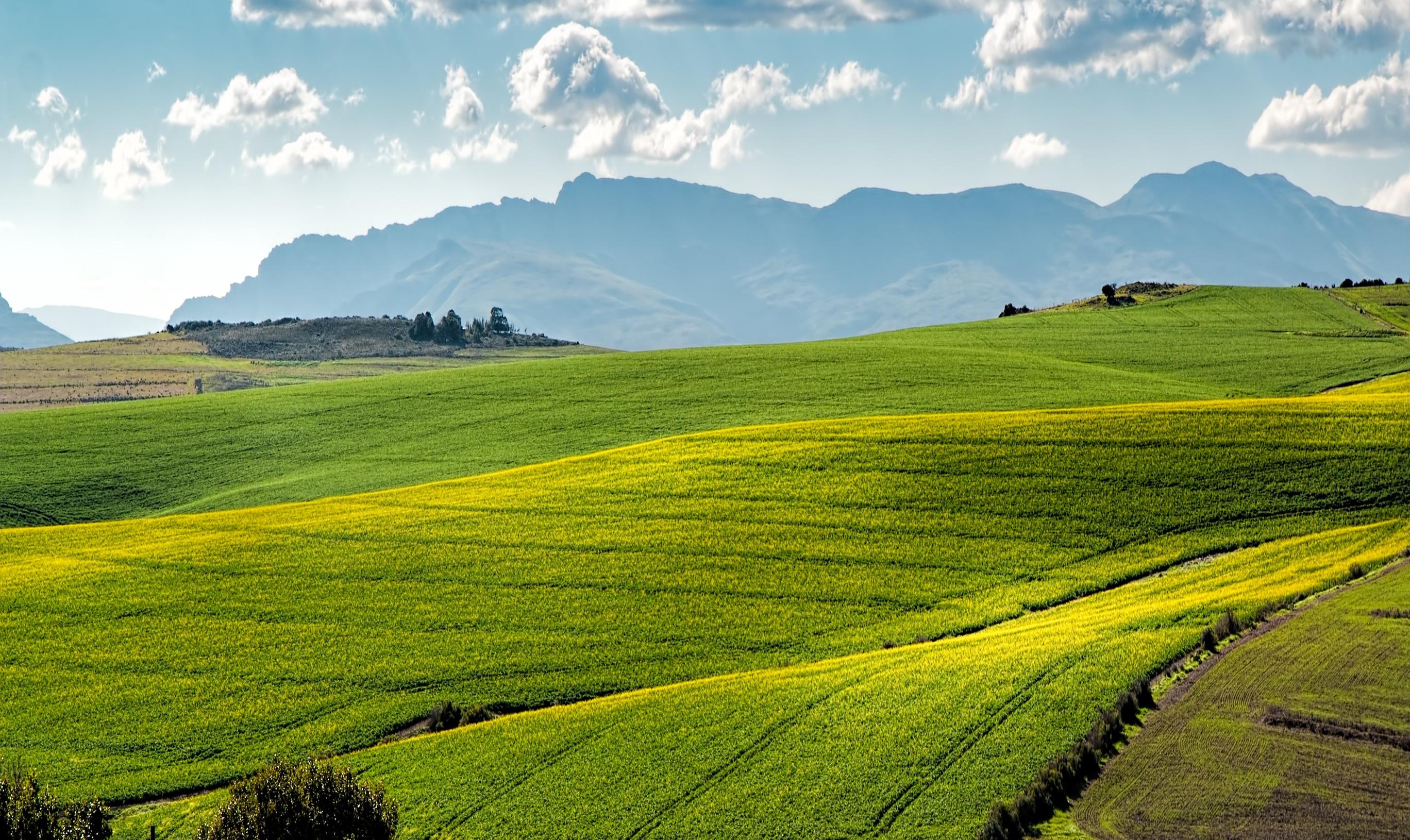 green field1