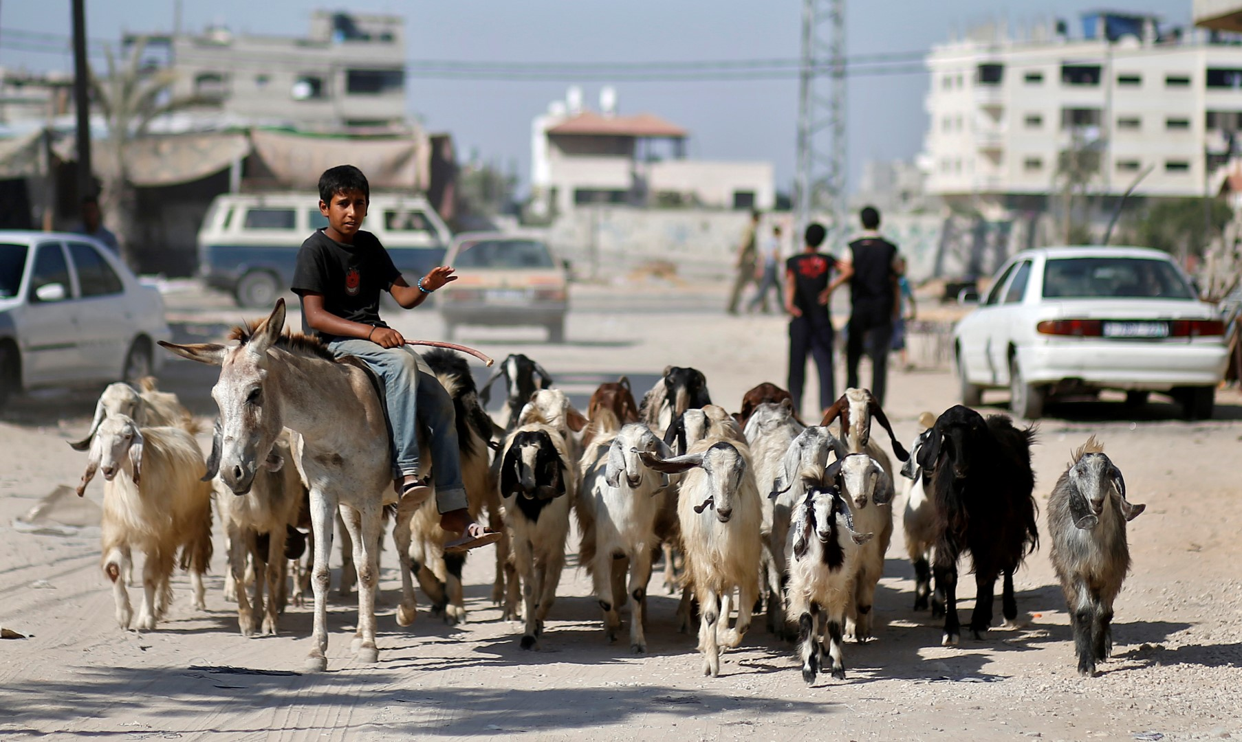 A Palestinian boy rides a donkey as he herds goats in the northern Gaza Strip June 24, 2013. REUTERS/Mohammed Salem (GAZA - Tags: SOCIETY ANIMALS) - GM1E96P071B01